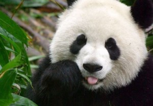 SEO Panda 4.0 Update